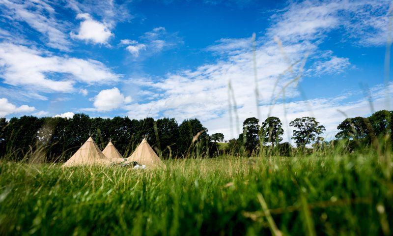 Teepees in the meadow