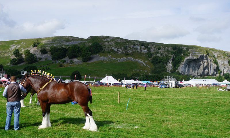 Shire Horses at Kilnsey Show